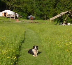 Hidden Valley Yurts - a campsite in the heart of the Wye Valley in it's own hidden valley