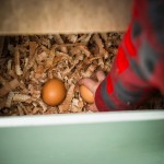 Eggs for breakfast glamping Wye Valley