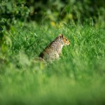 Wildlife at Hidden Valley Yurts glamping Wales