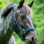 Horse at Hidden Valley Yurts glamping Wales