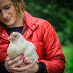 Chickens nature glamping