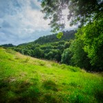 Woodland at Hidden Valley Yurts glamping site Wales