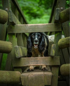 Dog at Hidden Valley Yurts glamping Wales